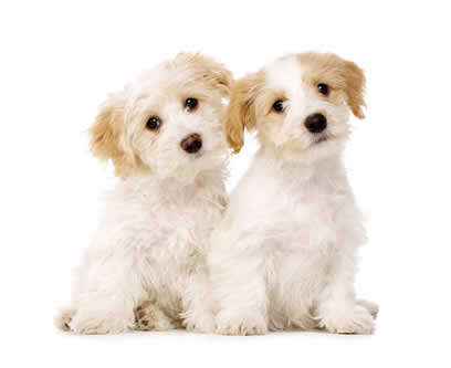 2 very sweet fluffy puppies