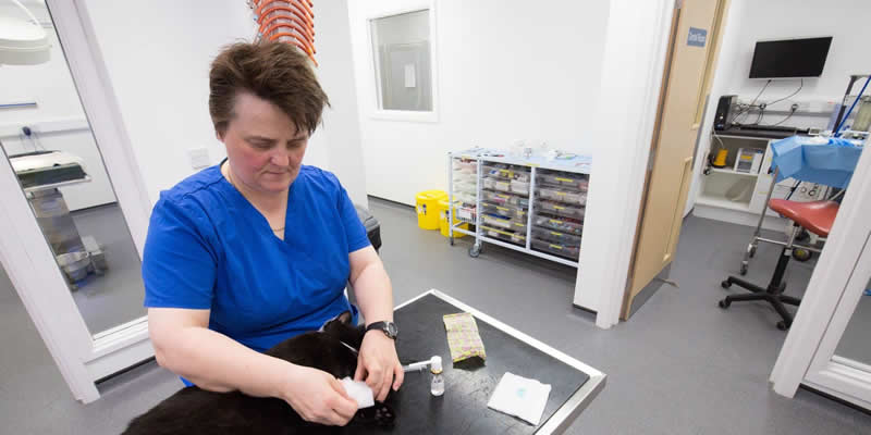 Vet Nurse Louise in new Ashfield House hospital preparing bandages
