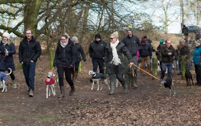The Great Whippet Walk