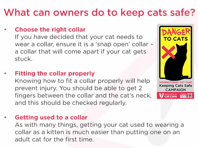written cat advice to keep cats safe and wear correct collars