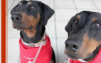Pet Blood Bank collection event on Sunday 22nd May – canine volunteers needed!