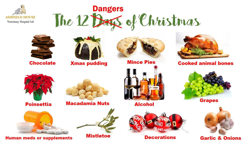 christmas dangers to your pets. Pet advice Nottingham