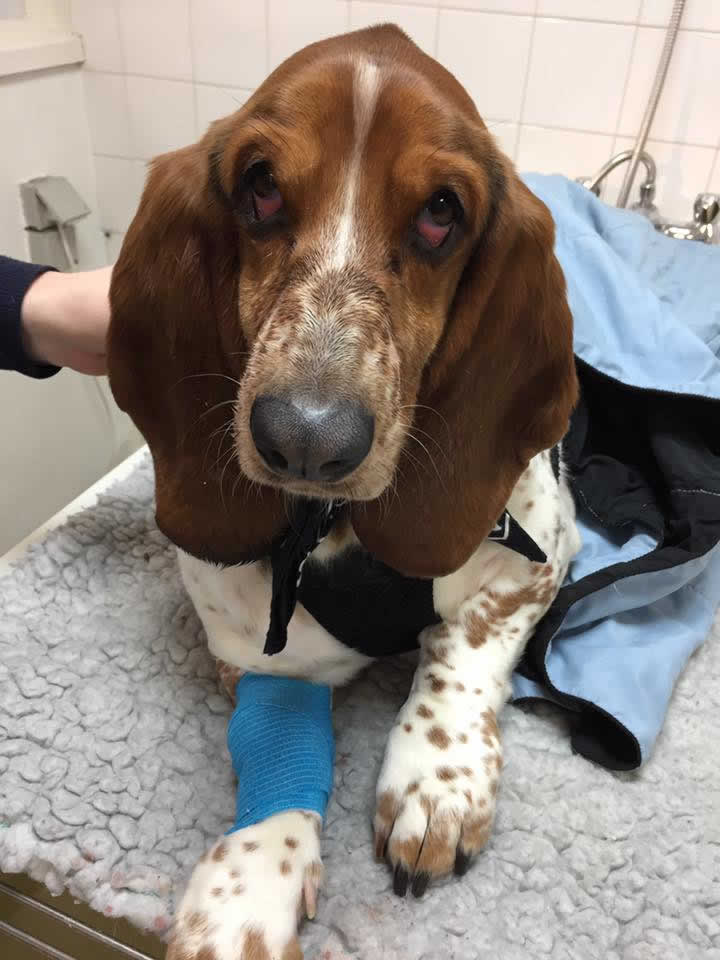 Bassett Isaac at Long Eaton coming round from a dental with droopy anaesthetic eyes