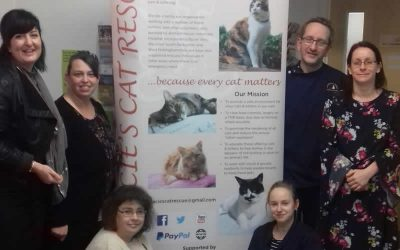 We help Gracie's Cat Rescue