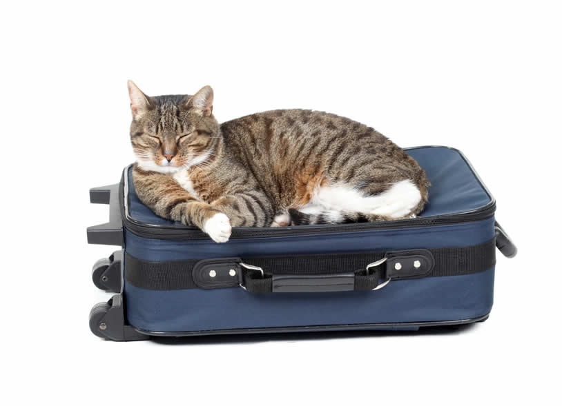 Content cat sleeping on suitcase