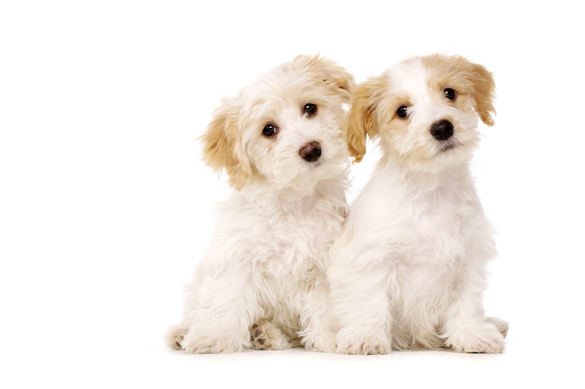 2 sweet puppies sitting together