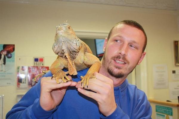 Bearded dragon on shoulder of client in consulting room at Ashfield House Vets