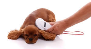 Dog having idchip with hand held idchip reader