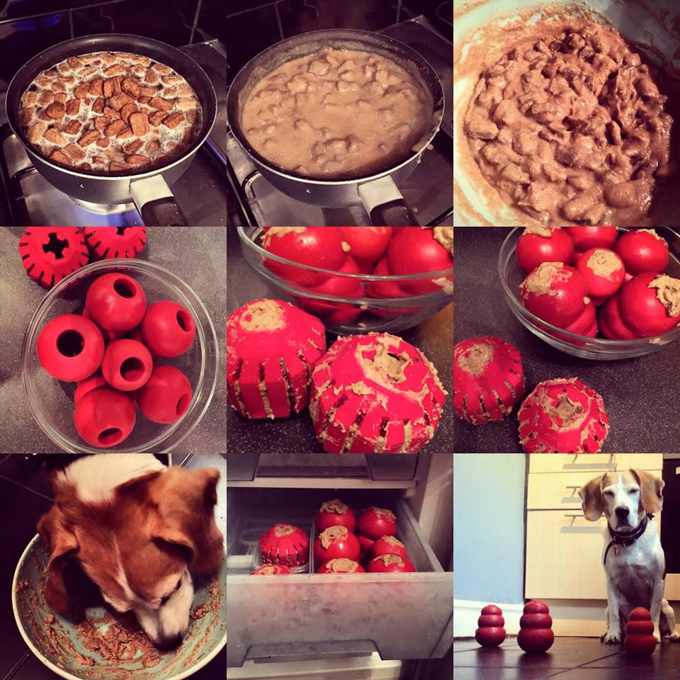 Images show a kong being filled with dog food and a happy hungry beagle eating