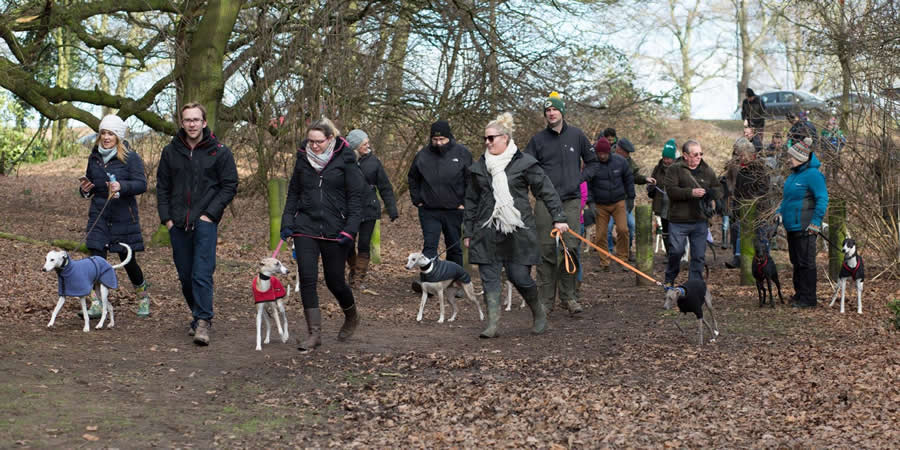 Whippets and owners out for a walk