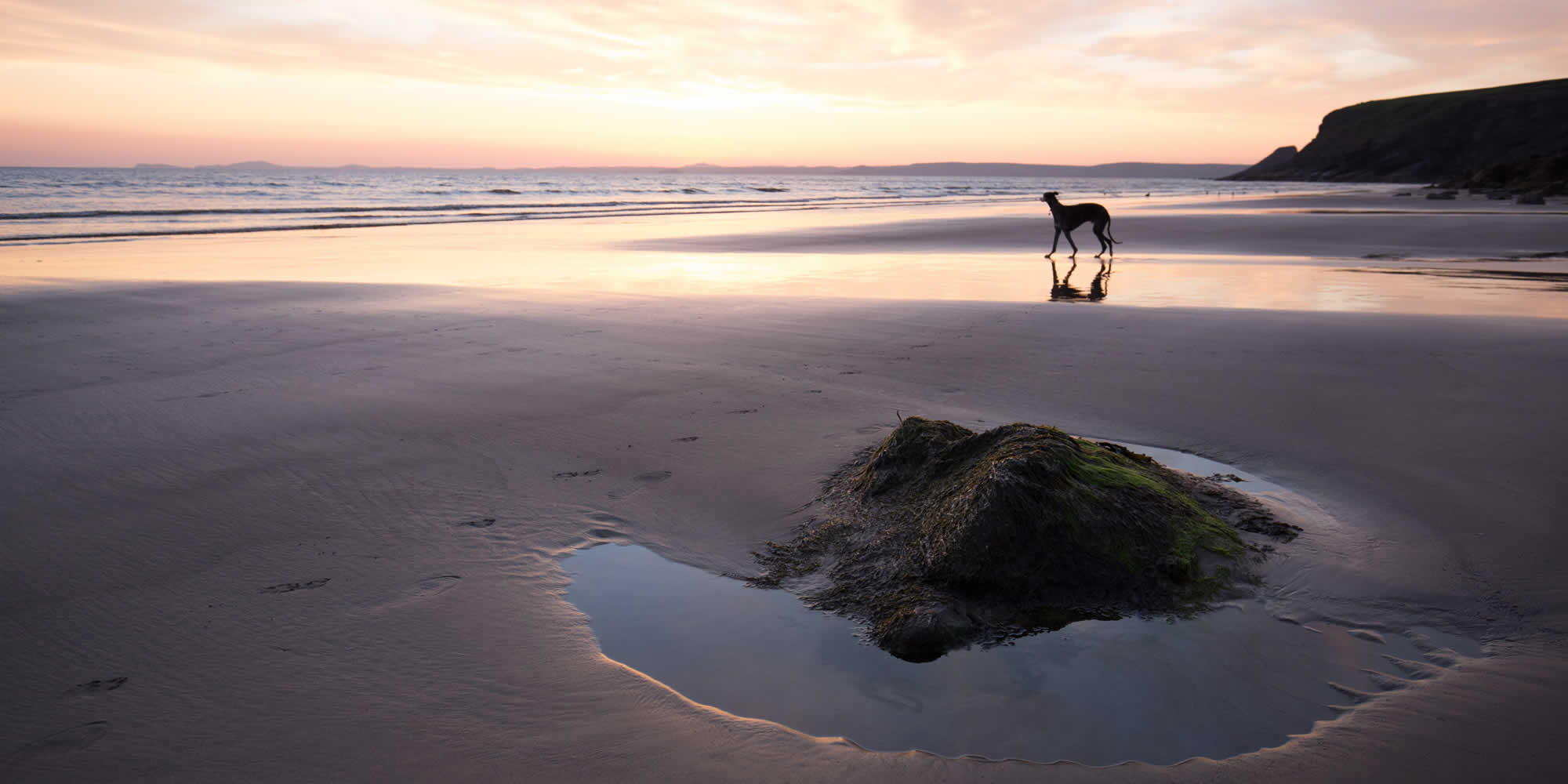 Beautiful beach scene in Wales of John Oleshko's dog Harvey