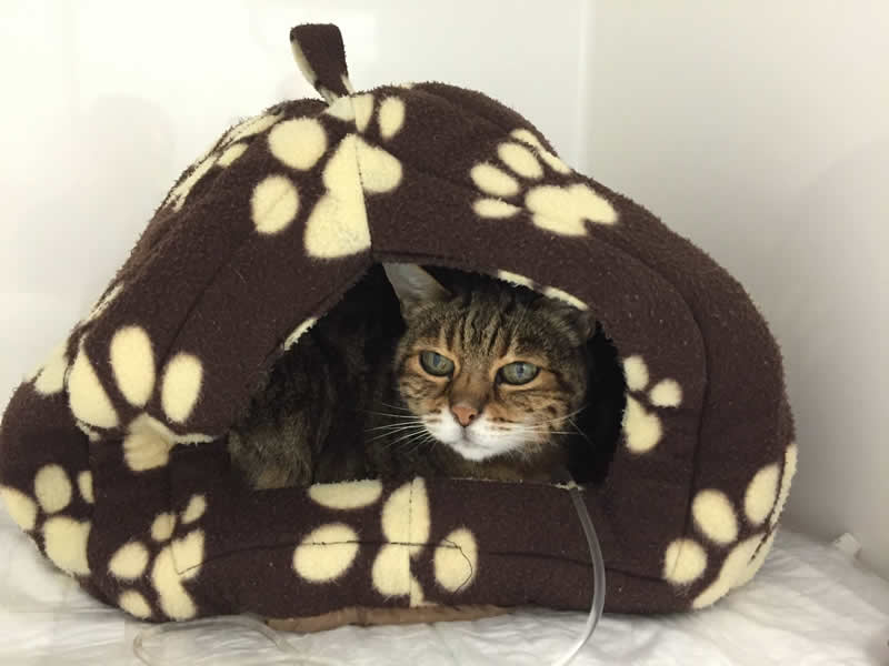 cat in kennels Ashfield House Vet Hospital