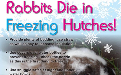 Rabbits die in freezing hutches