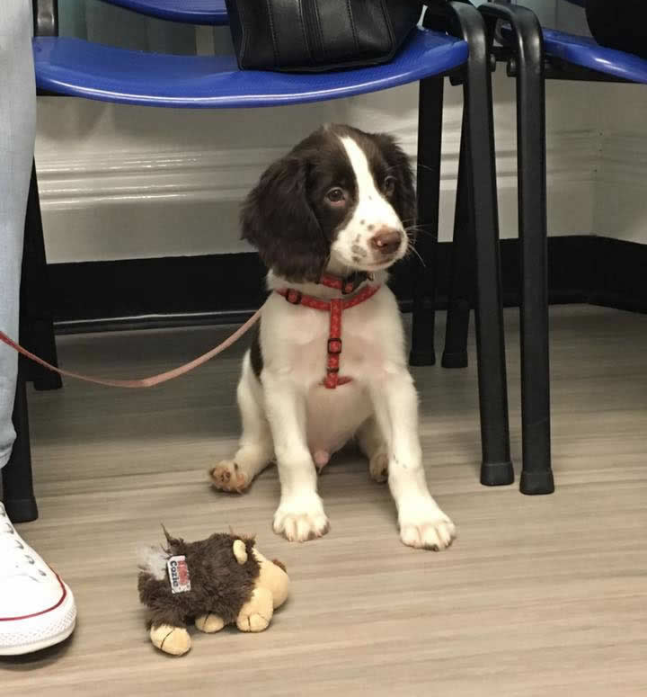 puppy at Ashfield House Vets Long Eaton puppy club