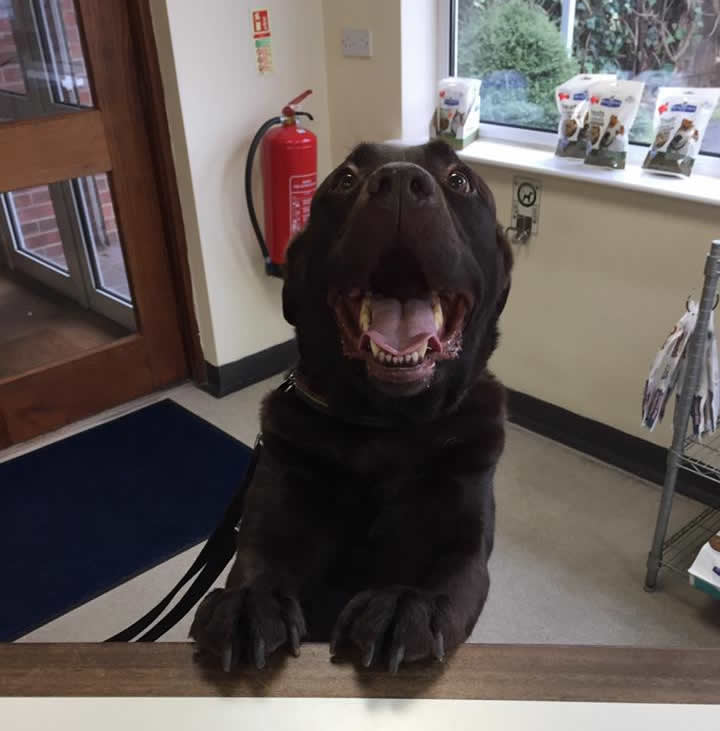 This very handsome boy Murphy came for his booster at our Byron clinic! Such a lovely boy!