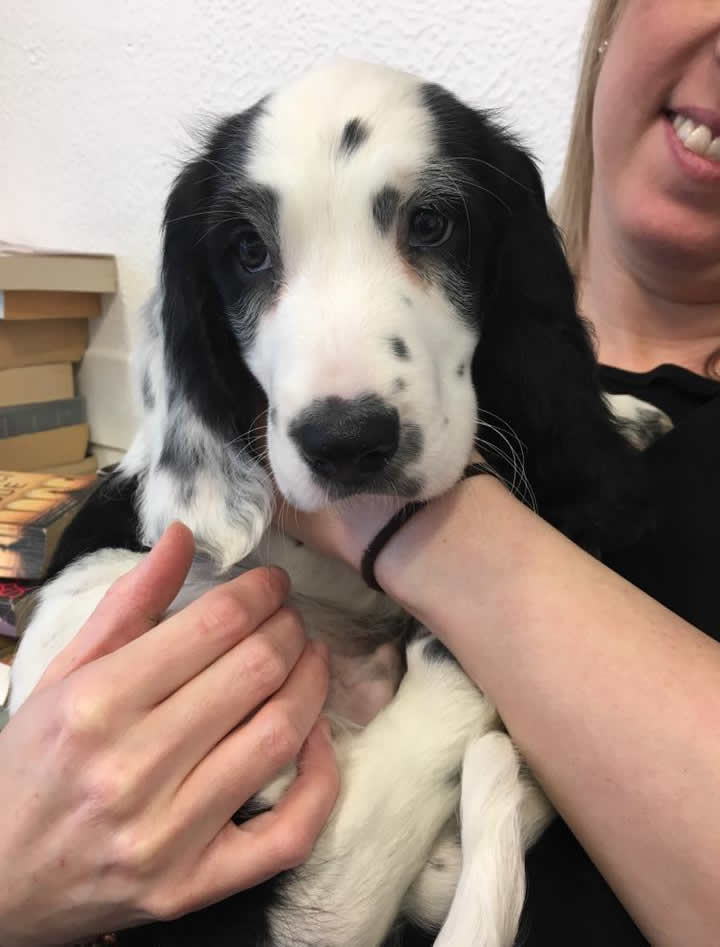 This little cutie is Stanley! He came in for his first vaccinations