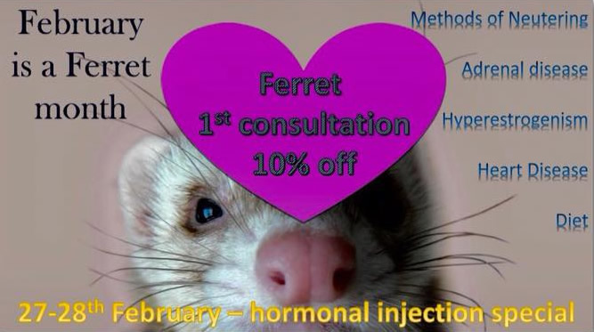 Ferret special at ashfield house vets