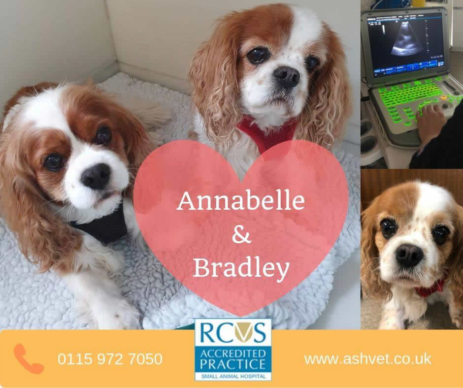 cavaliers at Ashfield House Vets Long Eaton