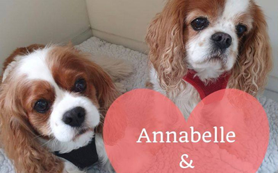 Annabelle and Bradley join the heart study
